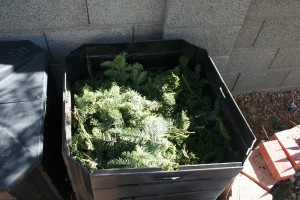 Christmas trees branches in compost